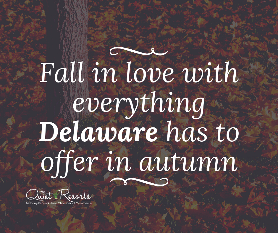 Fall In Love With Everything Delaware Has To Offer In Autumn (1)